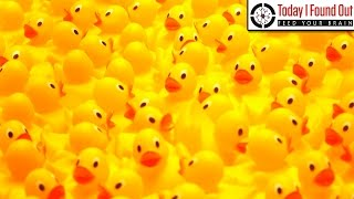 When Did We First Use Rubber Ducks?