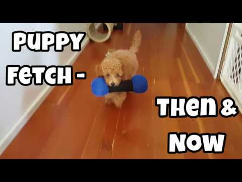 Puppy Fetch: Then & Now - Just Gin 2: Cutest Dog Ever! VOL. 33
