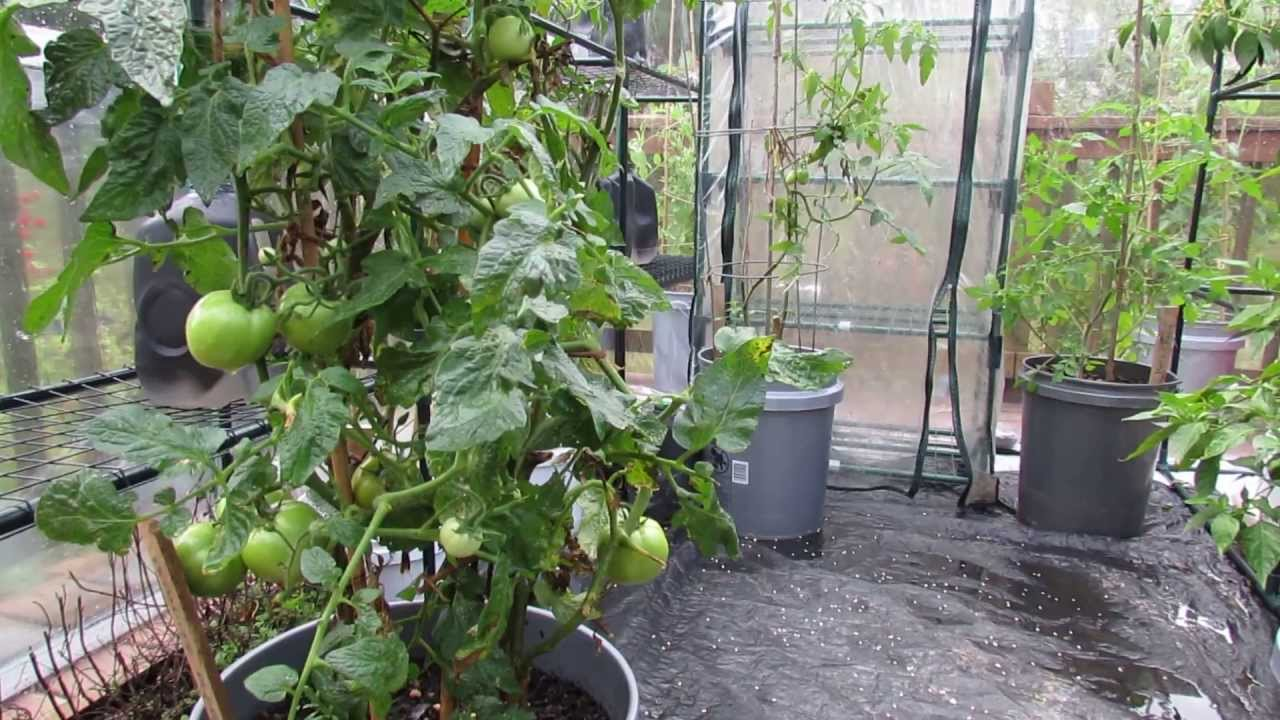 Part 2 Of 5 Organically Managing Diseases Insects In Garden Greenhouses The Rusted 2017 You