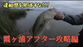 霞ヶ浦の今を釣る!違和感を見逃さないのが大事!