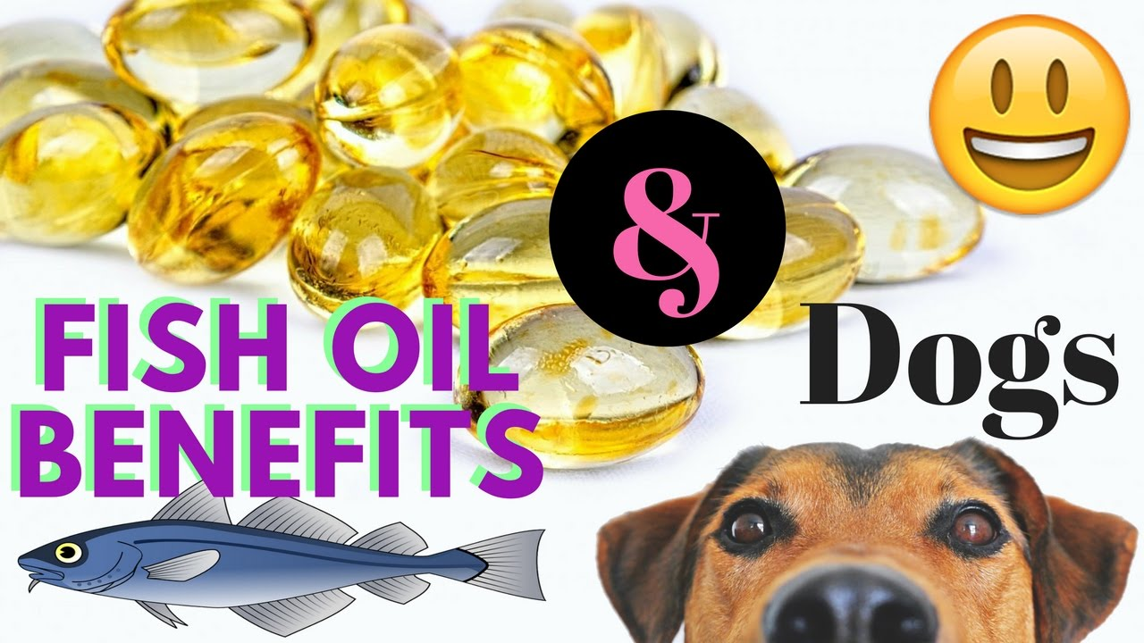 Fish oil benefits and dogs youtube for What does fish oil do for dogs