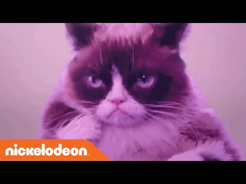 Grumpy Cat Dances To 'Hotline Bling'...