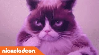 Grumpy Cat Dances To 'Hotline Bling' By Drake