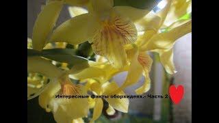 видео Самые интересные факты об орхидеях