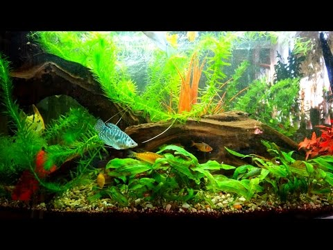 аквариум и его обитатели ( по запросу )