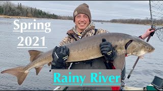 Rainy River - Walleye and Giant Sturgeon Slam (not click bait)