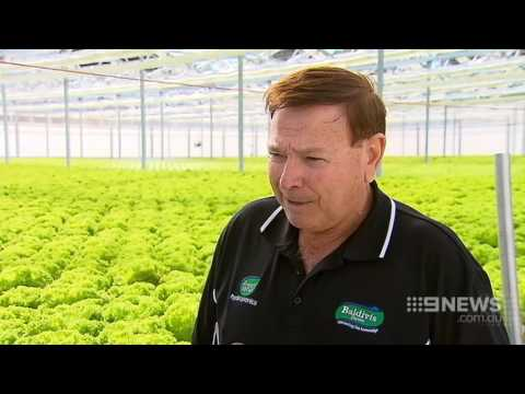 Futuristic Farm | 9 News Perth