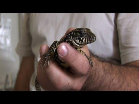 Brazil's wildlife victim of lucrative trafficking