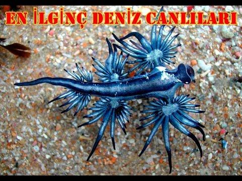 En İlginç Görünümlü 5 Deniz Canlısı - Özellikleri ve Sesli Anlatım - Garip Hayvanlar Serisi