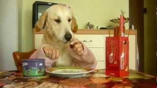 Собаки с руками  - нарезка