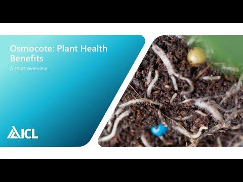 Osmocote plant health benefits