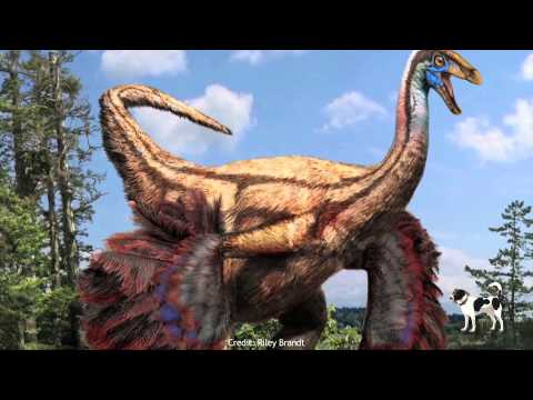 Feathered Dino Discovered