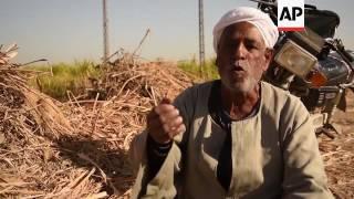 Sugar cane cultivation threatened by Ethiopian dam