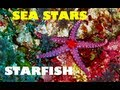 MERMAID MINUTE #2: STARFISH! Sea Stars, Sun Stars, Crown of Thorns Starfish and more!