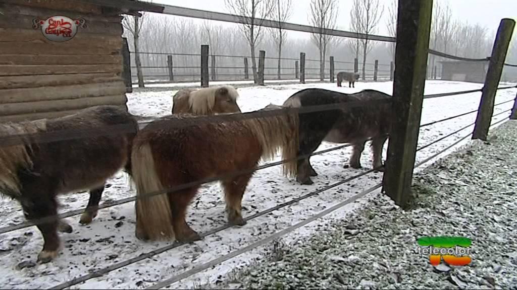 asinii e cavalli gay