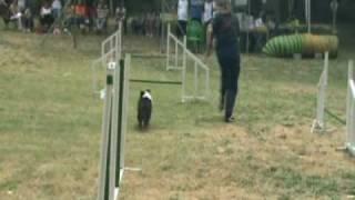 Shyla, es una perra que siempre da lo mejor de ella en las competic...