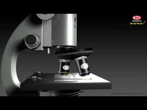 MICROSCOPE WORKING IN ANIMATION
