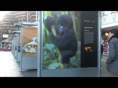 Wildlife Photography Exhibition @ The Moor (Sheffield)