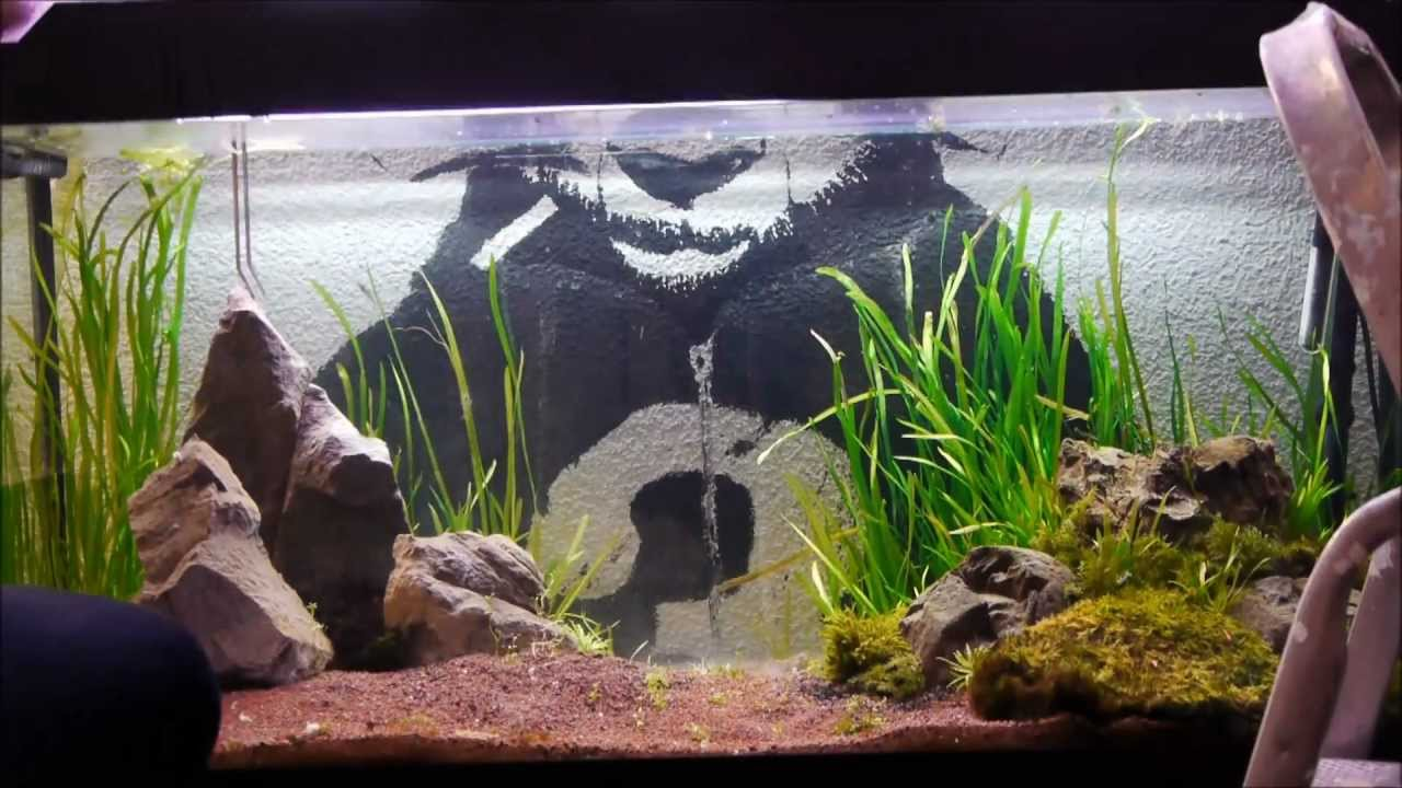 Marvelous A Moss Experiment, Aquarium Design U0026 Aquascaping Time Lapse   YouTube