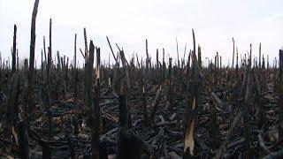 В пойме Припяти выжжен тростник, где водятся редкие животные и птицы, занесённые в Красную Книгу