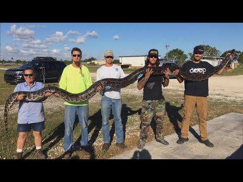 Florida Snake Hunter Finds Huge 17-Foot-Long, 132-Pound Python in Water