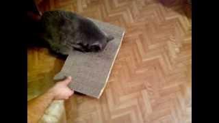 Картонная когтеточка - лежанка для кота
