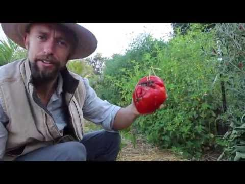 Edible Permaculture Landscape in Southern California