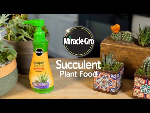 How To Use Miracle Gro Succulent Food Feed Your Succulents And Cactus Plants