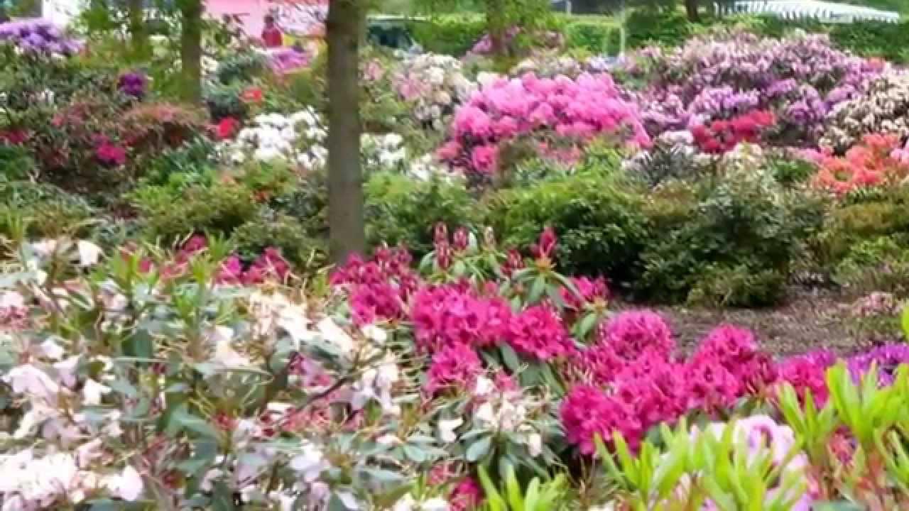 rhododendron park in bremen von klaus und regina. Black Bedroom Furniture Sets. Home Design Ideas