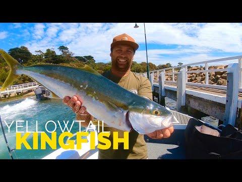Yellowtail KINGFISH In Melbourne's RIP - Jigging For Kingfish