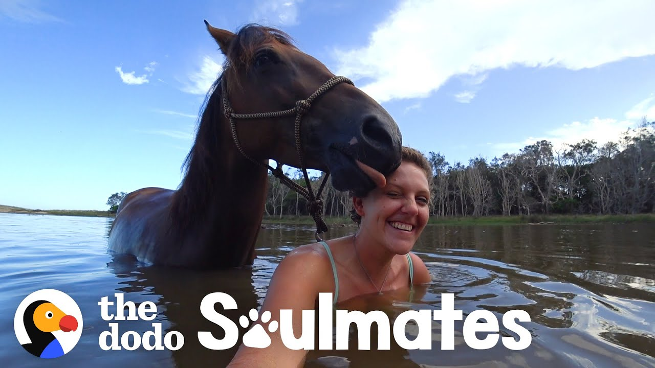 Loyal Horse And Her Mom Have The Strongest Bond   The Dodo Soulmates