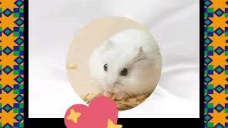 Мой клип про животных песня