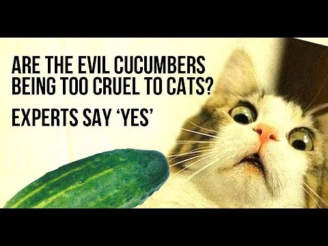 Cats scared of Cucumbers Compilation | Funny cats compilation