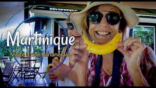 Visite d'une bananeraie en Martinique
