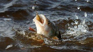 Рыбалка в Карелии 2016 Ловля окуня(Рыбалка в Карелии 2016 Ловля окуня Советую так же посмотреть https://youtu.be/hJfXocMFEXU Maximus LEGEND-X 22L 2.2m 3-10g Катушка ryobi..., 2016-06-14T06:54:49.000Z)