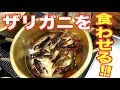 【ドッキリ】ザリガニをエビチリ風にして食わせてみた!