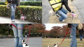 ドッグスクール 『リンモカ』 ○犬のしつけ○ペットホテル □電話:03-6456...