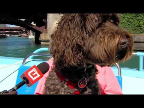 Mercury Canine Cruise Part 2