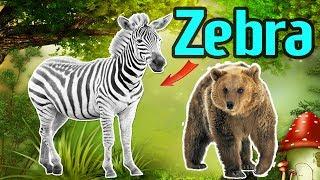 English for kids - Animals for kids to learn english, wild animals Zebra, Rhino... | Basic 2-25