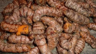 Turmeric How To Incorporate Turmeric In Your Juicing 101 Thumbnail