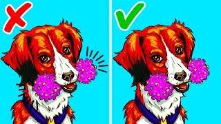 Siz Evde Yokken Evcil Hayvanınızı Meşgul Edecek 10 Şey
