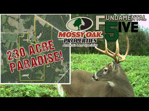 230 Acres Of IOWA PARADISE! - Mossy Oak Properties Fundamental 5ive