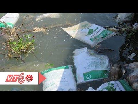 Kinh hoàng hàng trăm bao tải vịt chết trôi sông | VTC