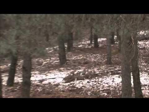 Săn lợn rừng