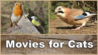 Movies for Cats to Watch Birds  The Ultimate Movie & Video for Your Cat