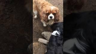 Собаки роют ямы во дворе, почему?