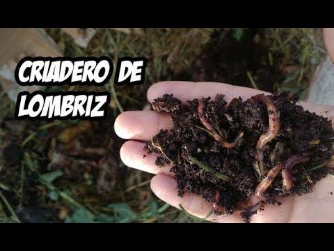 Como hacer un criadero de lombriz roja abono organico - Hacer abono organico ...