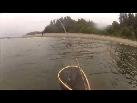 Puget Sound- Sea-Run Cutthroat trout