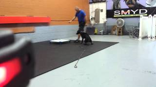 Baltimore Dog Training, Remote Collar Marker Training.