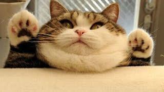 Śmieszne koty [#13]